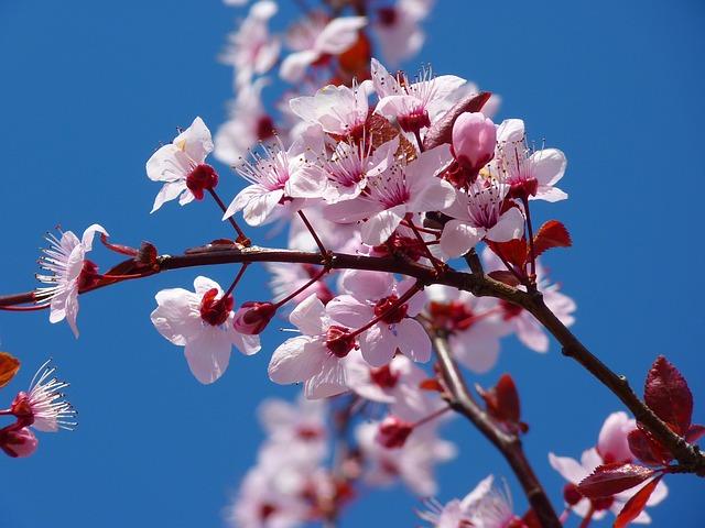 Image of Celebrate the Springtime at the National Cherry Blossom Festival Petalpalooza on April 6