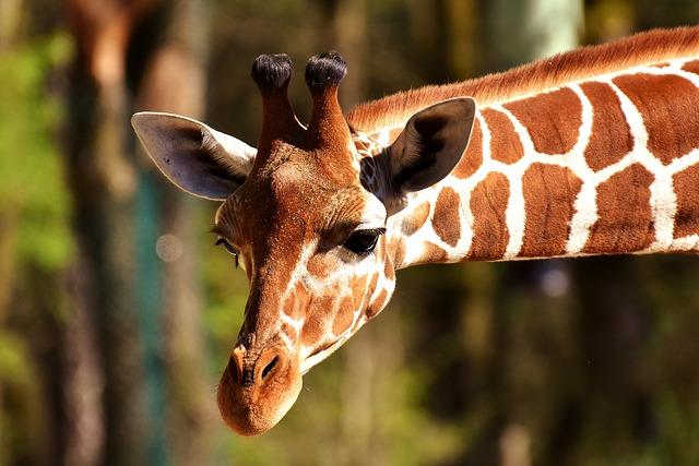 1557953816554.giraffe-2222908_640.jpg